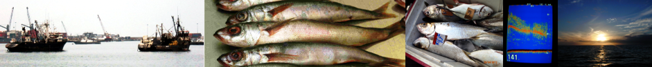 Banner_Fisheries_2.png